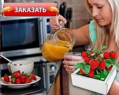 Чудо ягодница купить на официальном сайте