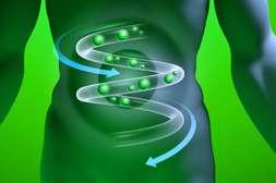 С лекарством Ламинор нормализуется выработка ферментов, гормонов.