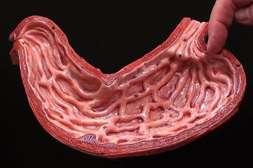 С гелем Пилорис происходит избавление от больных клеток.